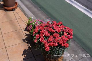 IMG_4739-2.jpg